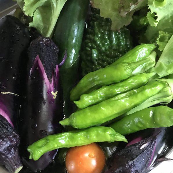 家庭菜園、夏野菜