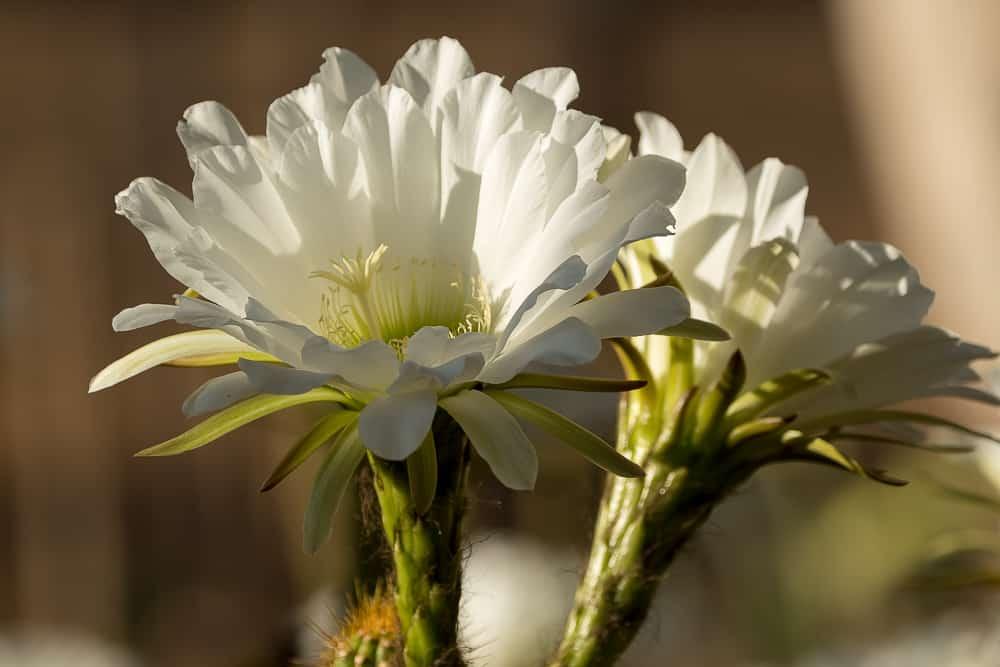 Blütenpracht auf der Farm Nutupsdrift in Namibia