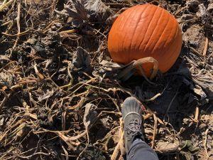 Smith Rock Pumpkin Patch
