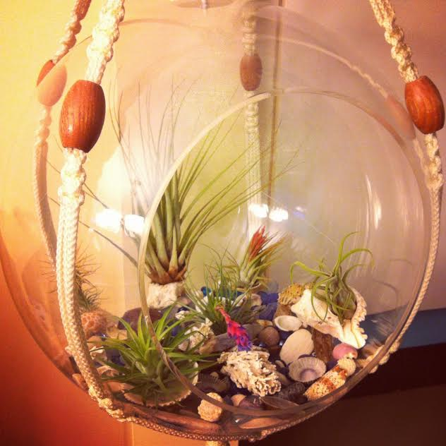 Upcycled Airplant Terrarium from Sew Creative 1