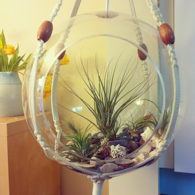 Upcycled Airplant Terrarium from Sew Creative 2