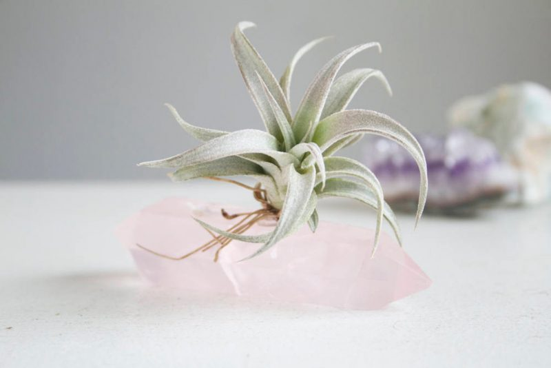 Shop Handmade Mother's Day Gift Ideas For Mom: Rose Quartz Airplant Holder from Falcon and Finch