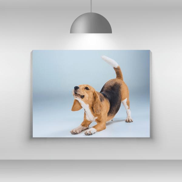 Tablou-canvas-Beagle