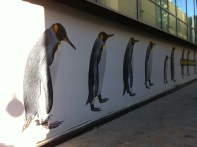 Penguins in Leeds. I didn't see a zoo in the new shopping centre