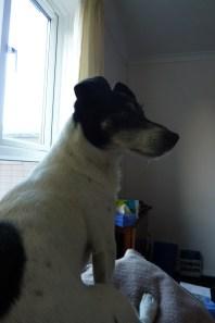 Milo on watch