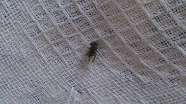dead wasp on sofa