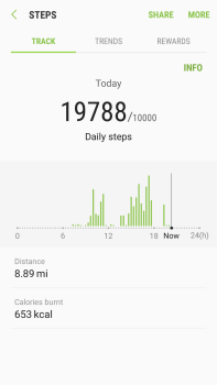 What I walked today!