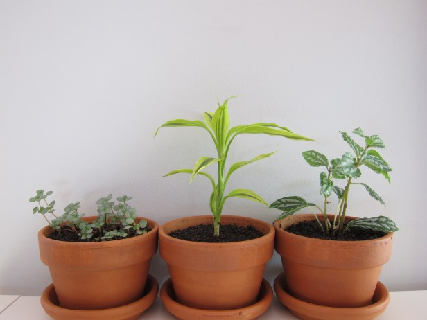New plants for home