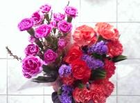 Flowers to brighten up Winter