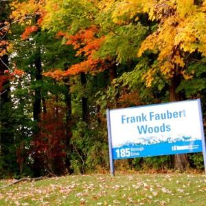 Frank_Faubert_Woodlot_Scarborough