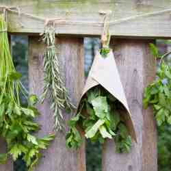 A Simple Guide to Drying Your Herbs