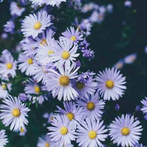 flowers-mental-health