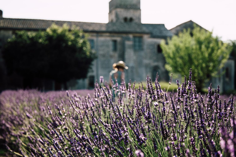 O Et Quand Photographier La Lavande De Provence