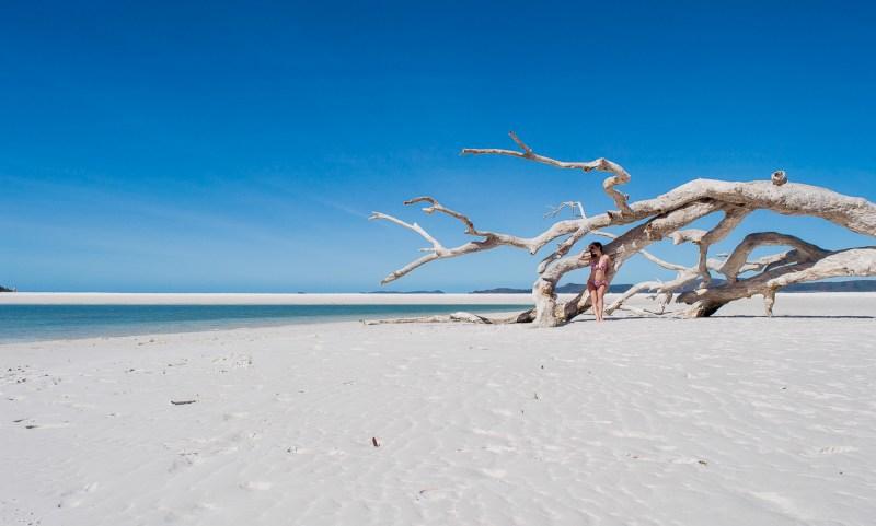 bois flotté sur la plage de whiteheaven