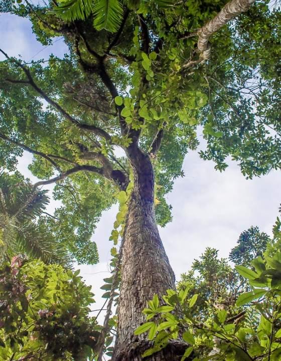 #3  Roadtrip de Cairns à Cap Tribulation