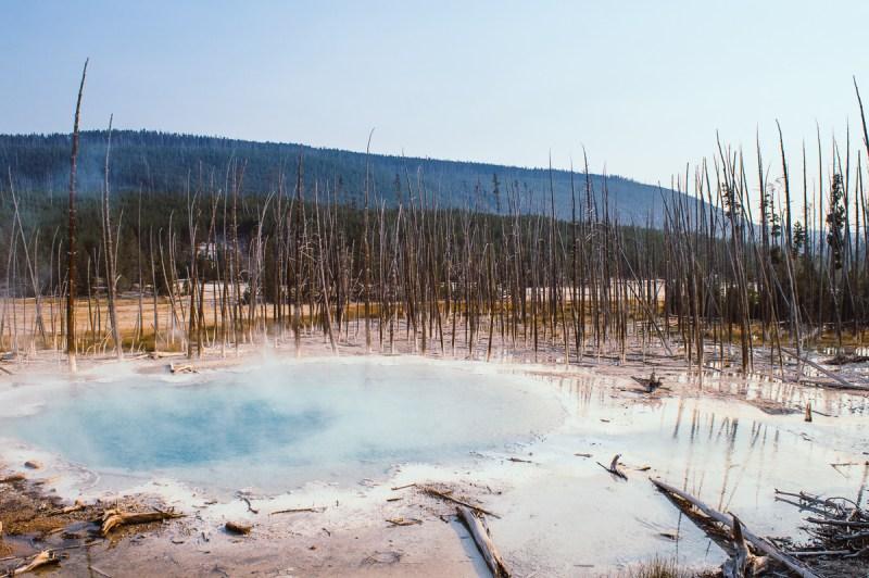 back basin dans le secteur de norris geyser basin à Yellowstone