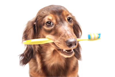 advice from 24 hour vet about pet health