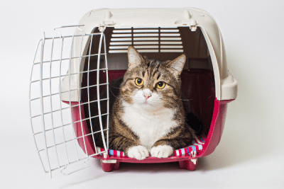striped tabby cat laying in a car carrier
