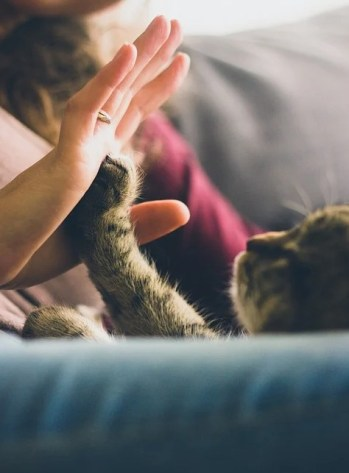 Cat Playing with Person