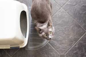 how often should a cat poop featured image