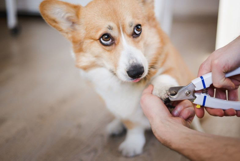 how to trim dog nails featured image