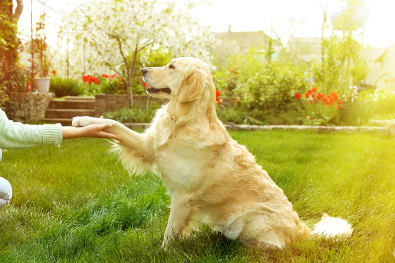 how to teach dog to shake featured image