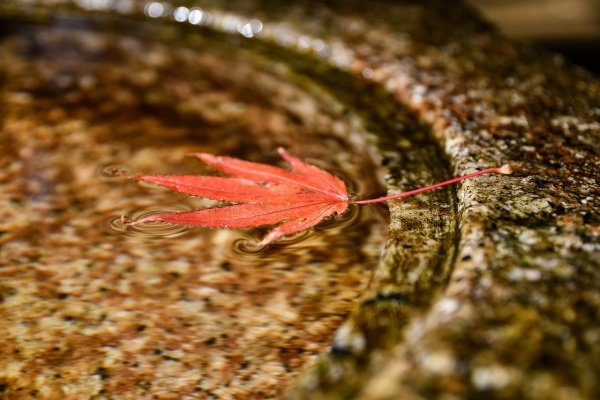 read leaf in fresh and clean water