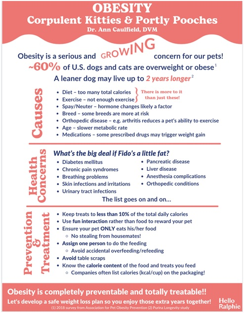 pets obesity corpulent kitties & portly pooches