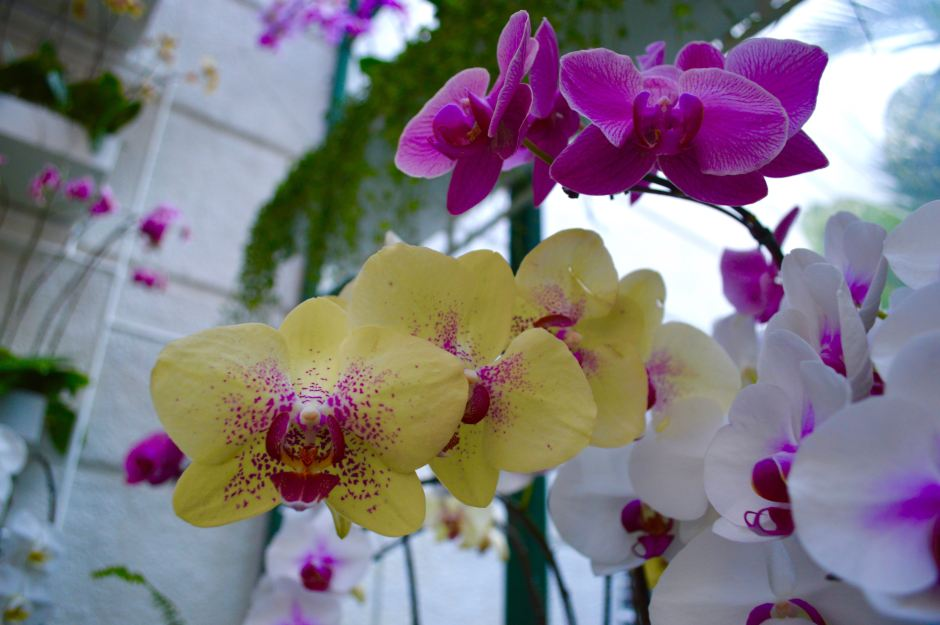 Orchids | High Tea at the Majestic Hotel | Hello Raya Blog