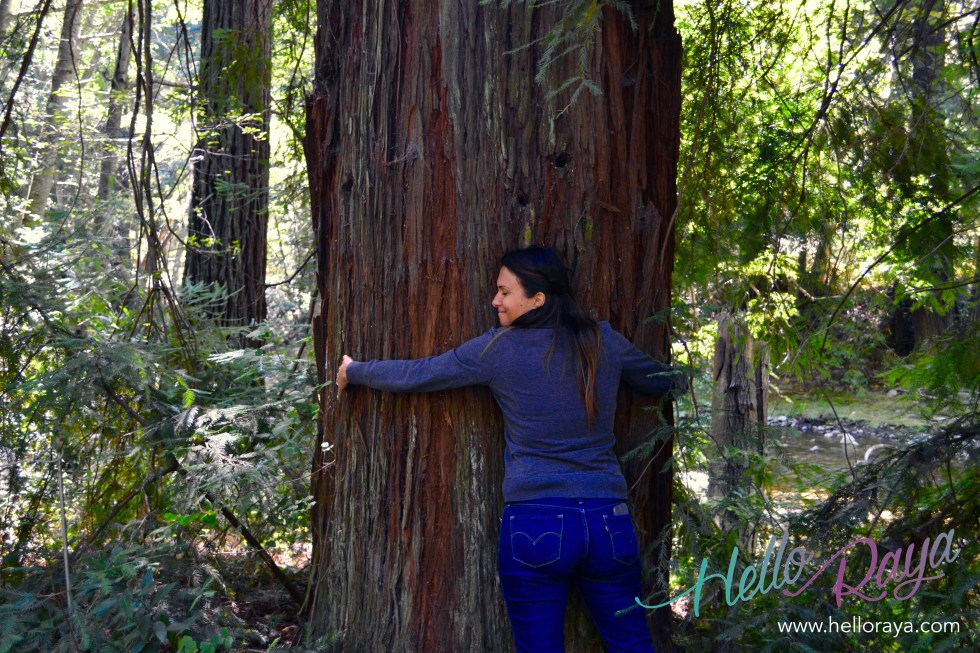 Pfeiffer National Park | Pacific Coast Highway Road Trip | Hello Raya Blog