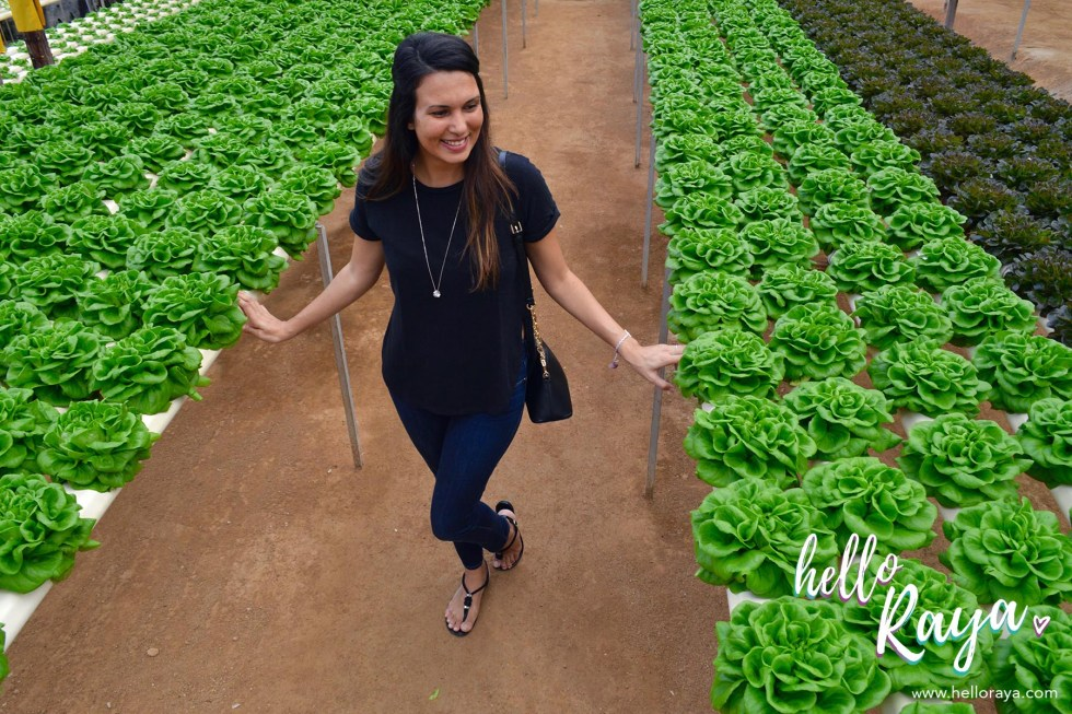 Big Red Strawberry Farm | Things to do in Cameron Highlands | Hello Raya Blog