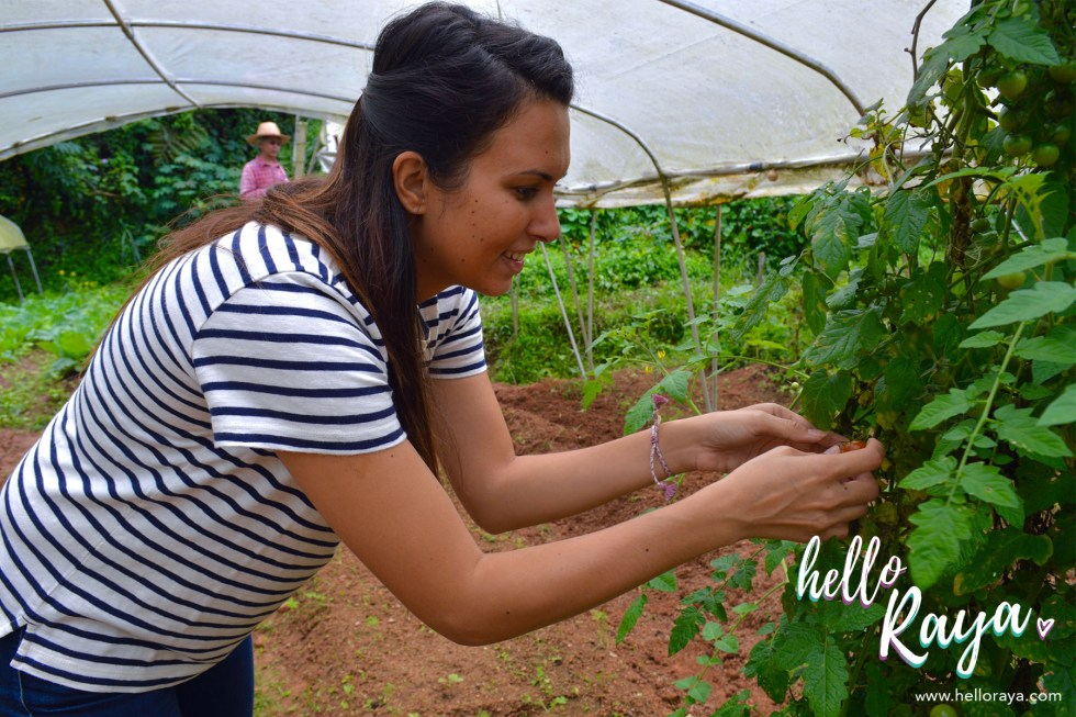 Hatiku Organic Farm | Things to do in Cameron Highlands | Hello Raya Blog