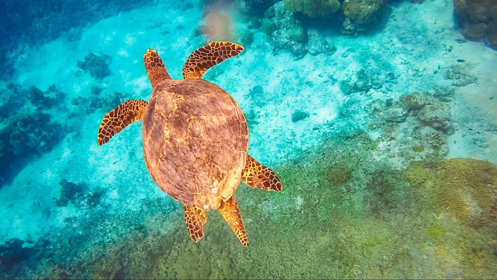 Ultimate Southeast Asia Bucket list - Experiences in Southeast Asia - Swimming with Turtles in Gili Trawangan | Hello Raya Blog