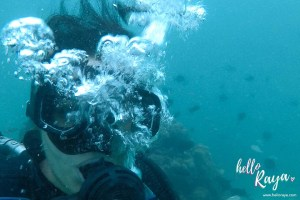 For the Love of the Ocean – Diving Pulau Weh with Bubble Addict