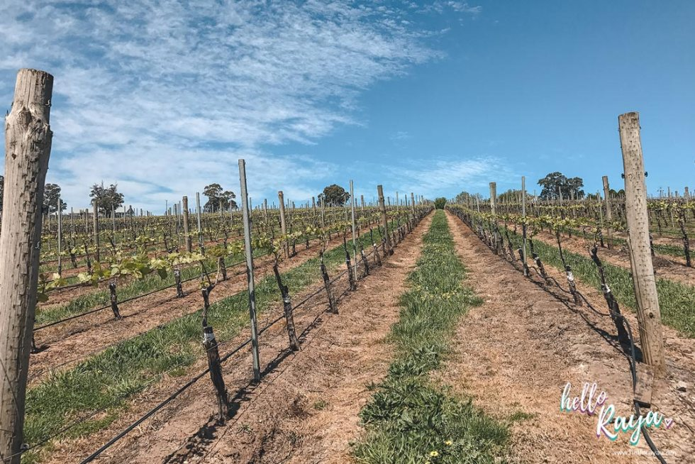 Adelaide Hills Wineries & Hanhdorf | Barristers Block Winery | Hello Raya Blog