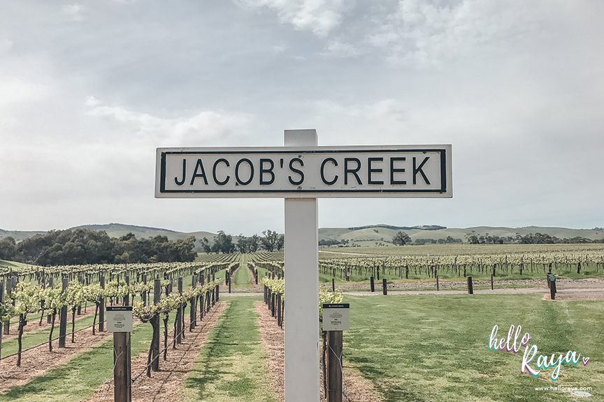 Barossa Valley Wineries - Jacobs Creek Winery | Hello Raya Blog