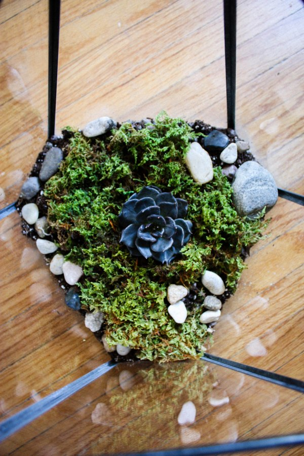 Terrarium Kit DIY 4