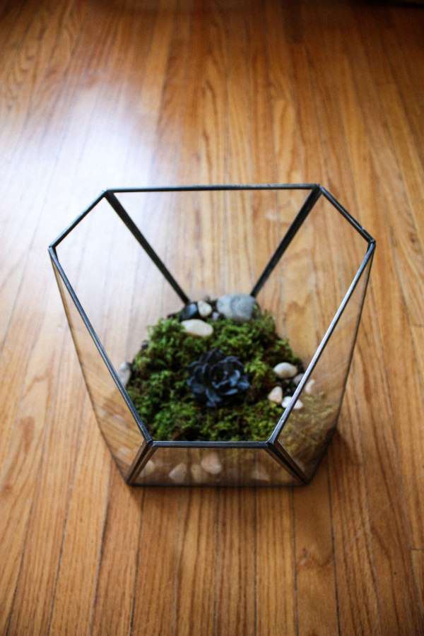 Terrarium Kit DIY 6
