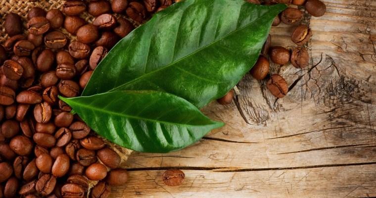 Coffee Leaf Tea Guide