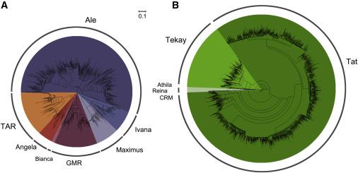 Genome in Tea Responsible For Tea Taste