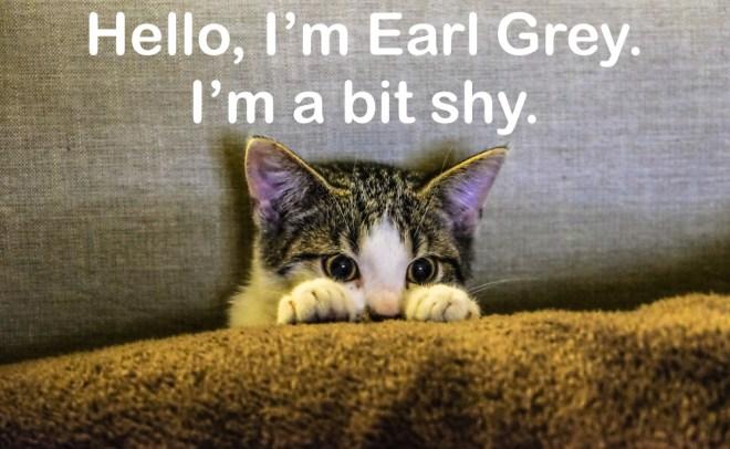 tea names for cats kittens