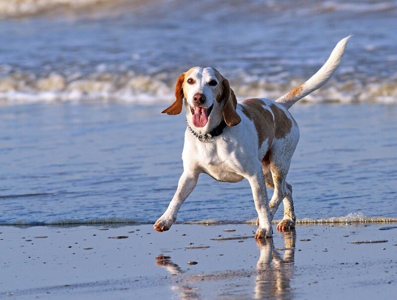 Hotel hond strand Texel