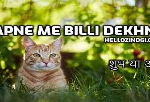 Sapne Me Billi Dekhna अर्थ शुभ या अशुभ हो जाएँ सावधान