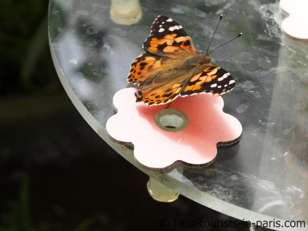 Schmetterlingshaus im Parc Floral in Paris