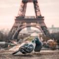 Romantisches Paris