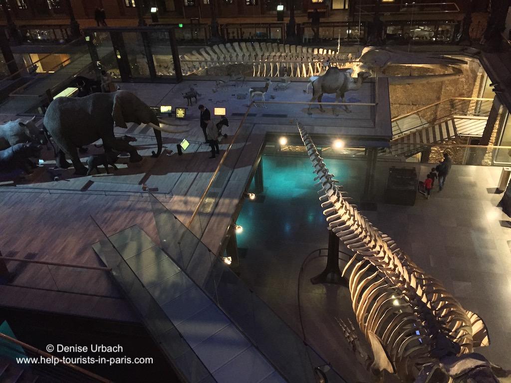 Naturkundemuseum Paris Skelette
