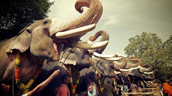 Elephants being forced to keep their heads raised