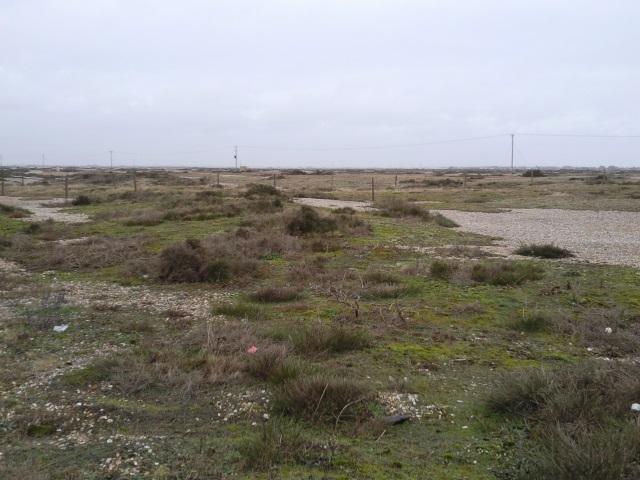 Flat shingle terrain with scrubby vegetation as far as the eye can see.