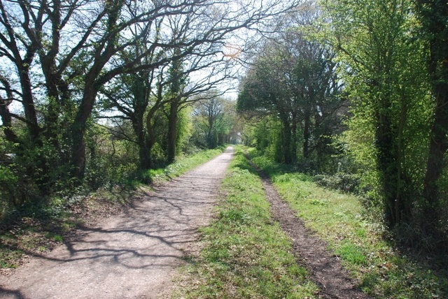Hayling Billy Line trackbed path - a leafy tunnel