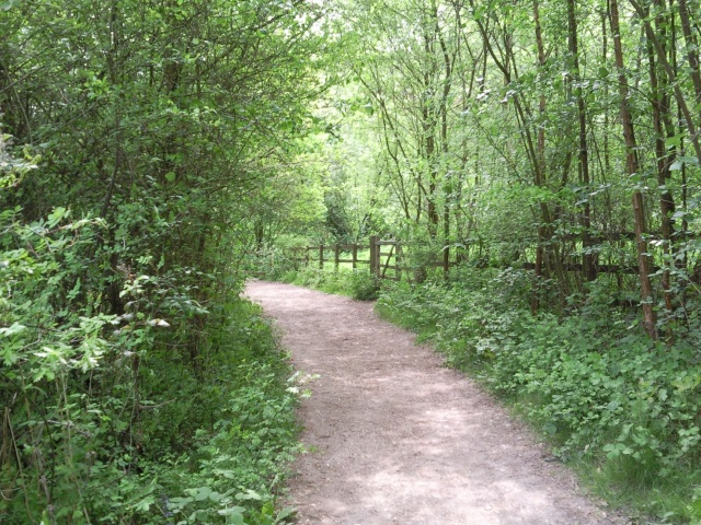 A broad track through green, leafy forest